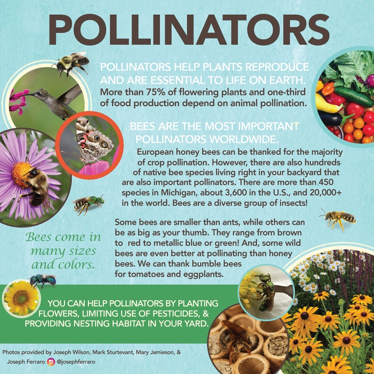 pollinator poster web